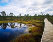 Lahemaa Rahvuspark on populaarne klassiekskursioonide sihtkoht. Külastame näiteks rabasid