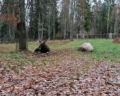 ©M. Lind. Elistvere loomapark