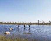 ©A. Teede. Kõnnu Suursoos on rabalaukad, kuhu on mõnus sooja ilmaga ujuma minna