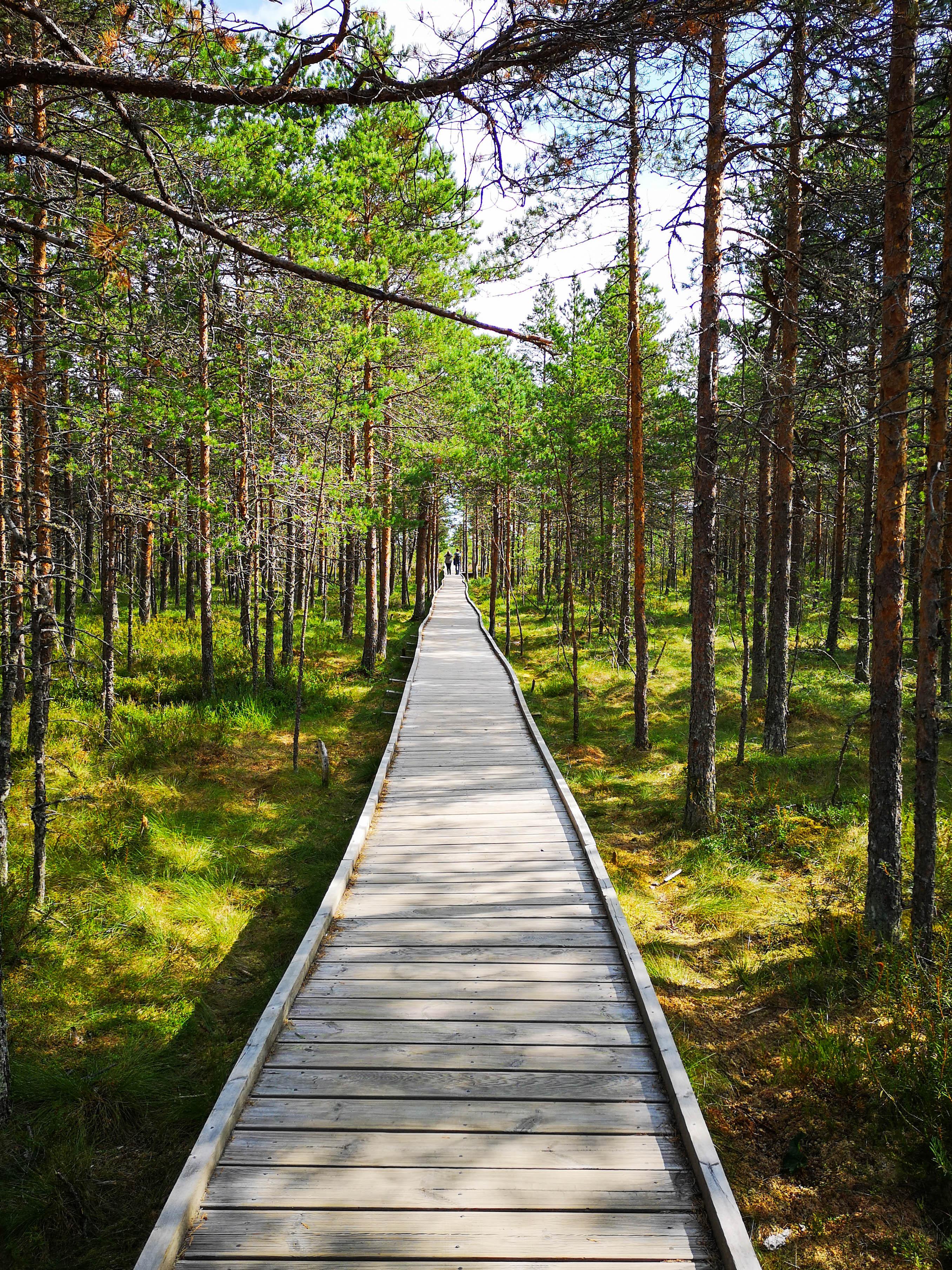 ©J. Leppmets. Lahemaa Rahvuspark on populaarne klassiekskursioonide sihtkoht